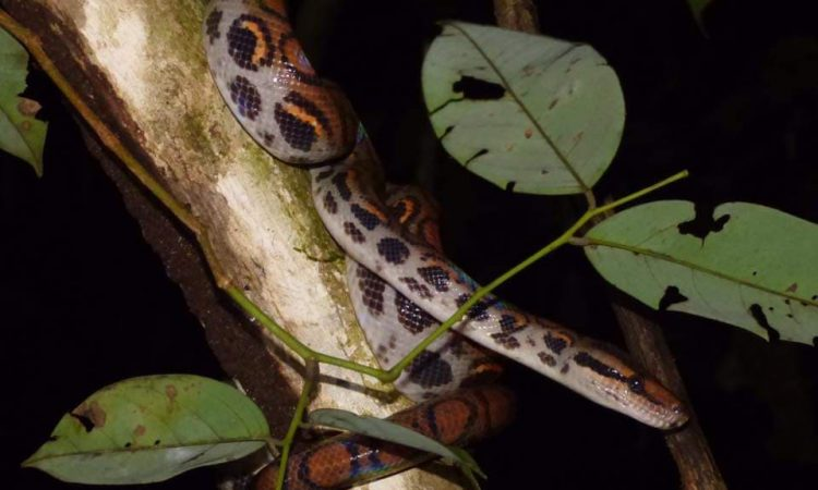 """Yasuni National Park"" 5 Days/4 Nights gallery images"